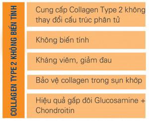 collagen type 2 không biến tính