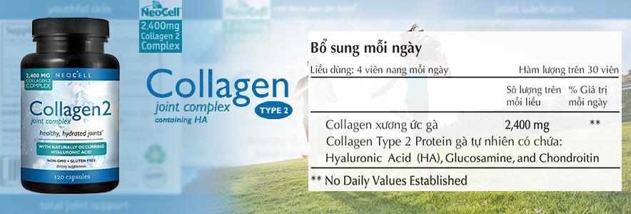 thành phần collagen type 2