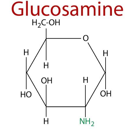 Glucosamine cấu tạo từ 2 thành phần chính là Glucose và Amino Acid Glutamine