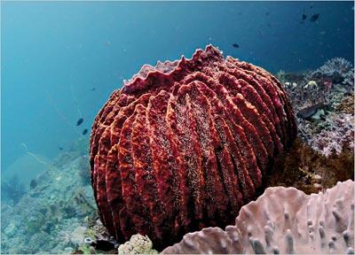 Bọt biển thủy sinh