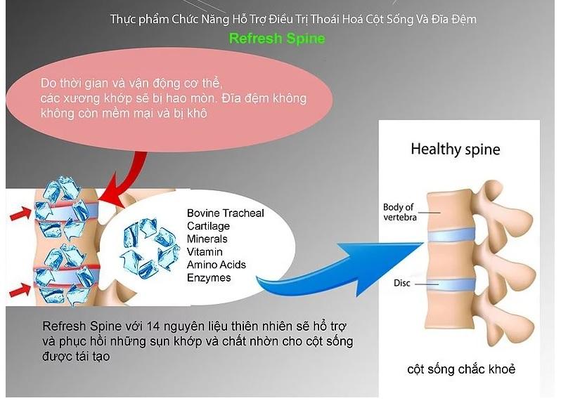 Cơ chế tác động của Refresh Spine với hệ thống cột sống
