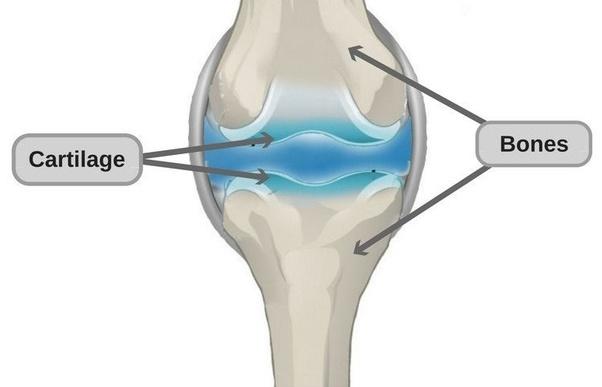 Sụn cá mập BlueShark Cartilage cải thiện sức khỏe sụn khớp